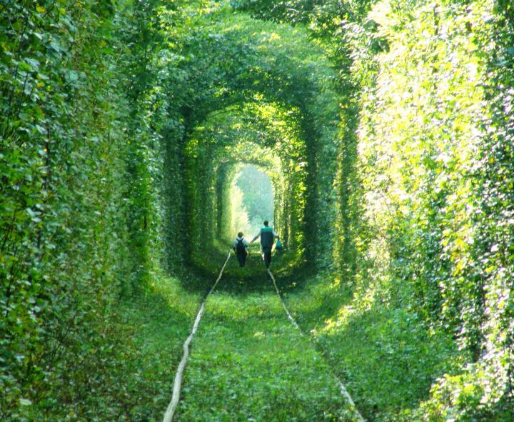 Тоннель Любви - Клевань, Ровно, Украина - фото