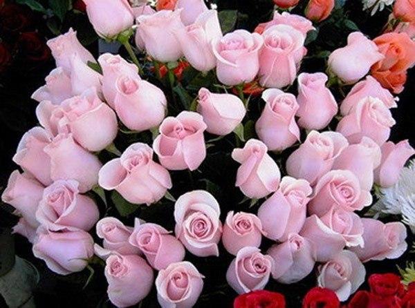 Анимашка: великолепный букет цветов